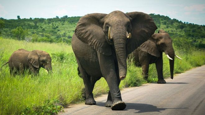 De Beers moves 200 elephants from South Africa to Mozambique