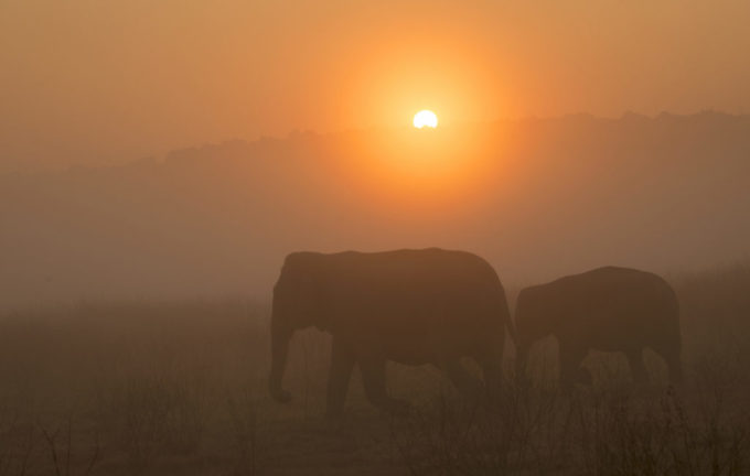 Skin poaching of Asian elephants, a crisis unfolding in Myanmar, could crush the species