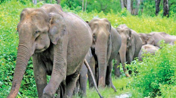 Sealing of illegal resorts at elephant corridor begins