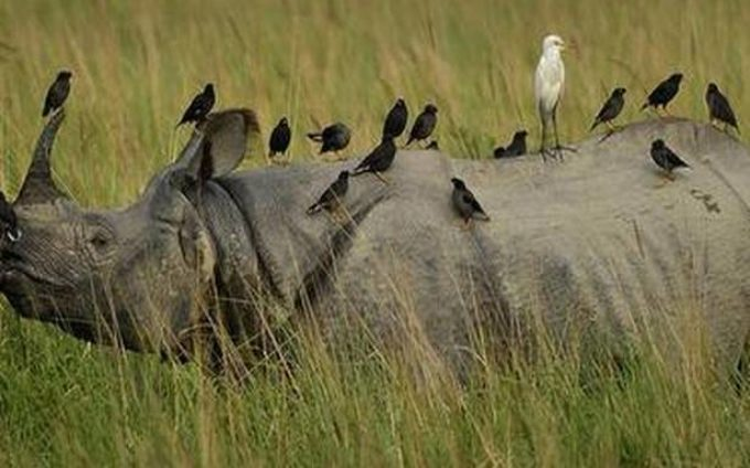 In rhino country, a division to boost conservation efficiency