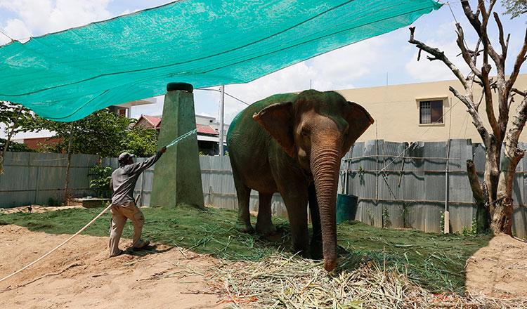 WWF urges stronger elephant conservation