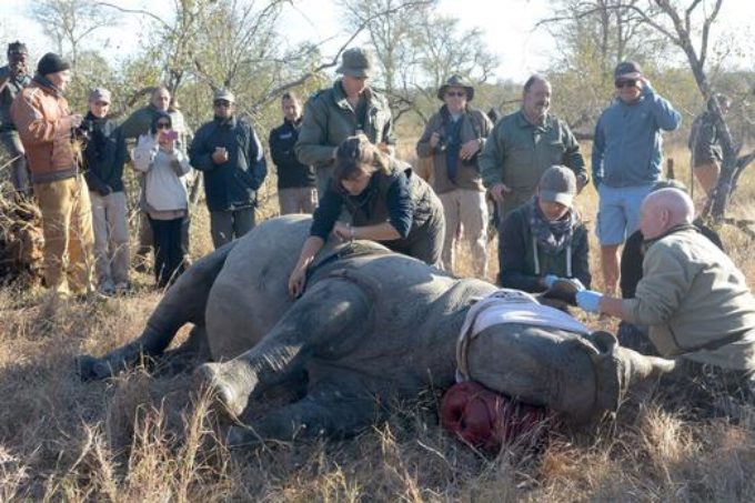 'People need stake in rhino's survival'