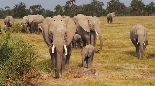 Govt seeks Sh15bn to compensate those killed by wildlife