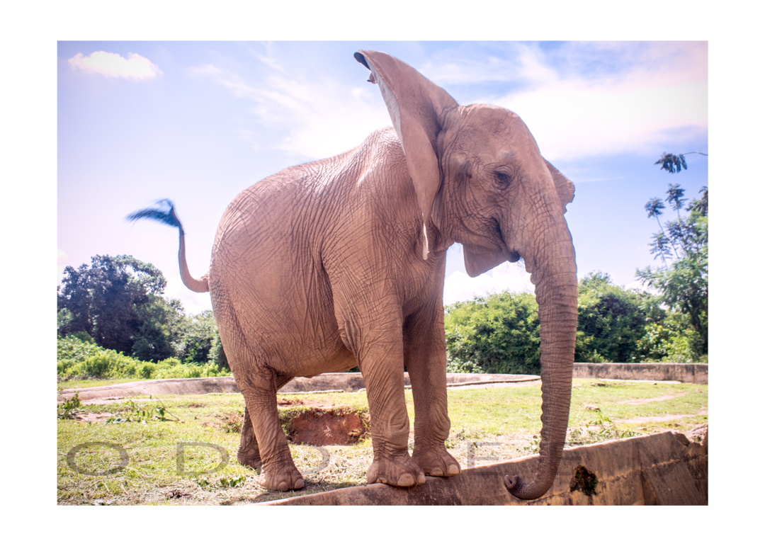 World Elephant Day 2018: An Urgent Call to Protect Nigeria's Elephants