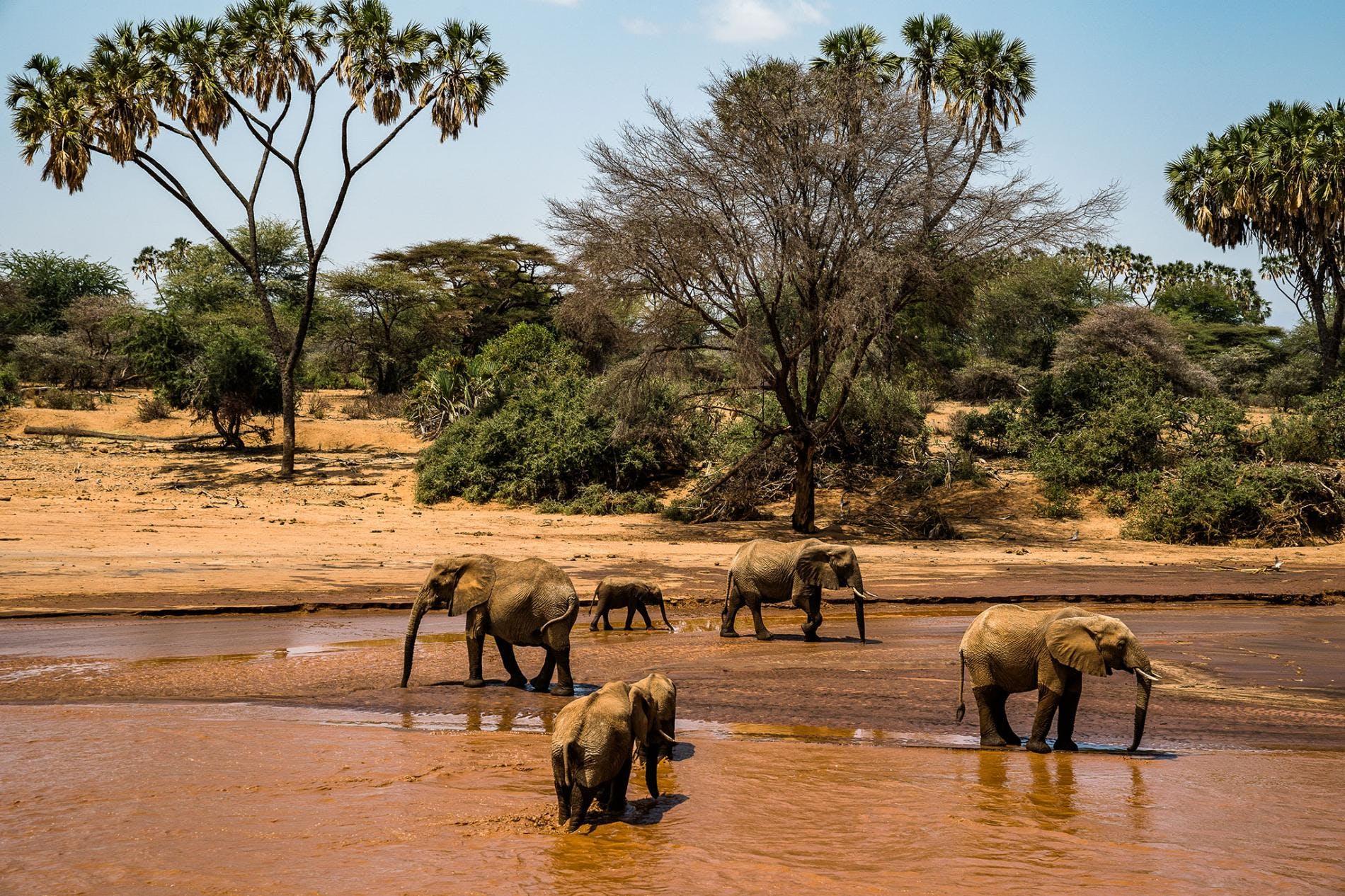 How Tourism Helps Elephants—and People—Make a Home